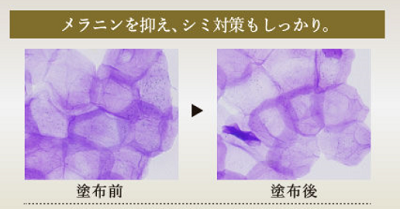 山田養蜂場化粧品 口コミ