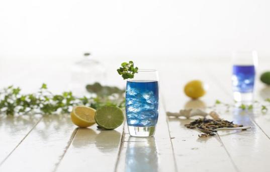 青の花茶 芸能人