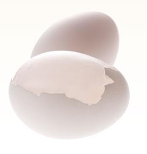卵殻膜 化粧品 効果
